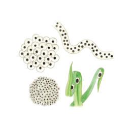 Anfibi - ovature, Amphibians - egg masse