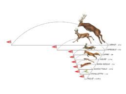 Animali in salto, Jumping animals