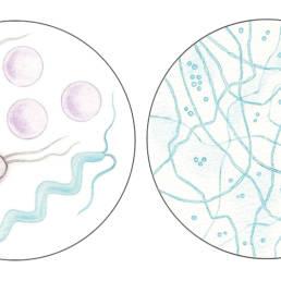 Batteri e funghi, Bacteria and fungi