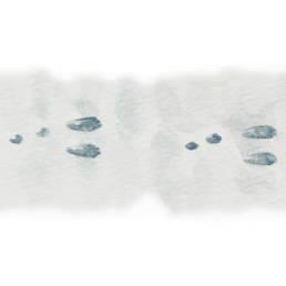 Minilepre - impronte, Eastern Cottontail - tracks - Sylvilagus floridanus