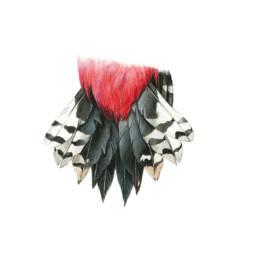 Picchio rosso maggiore - coda, Great Spotted Woodpecker - tail - Dendrocopos major