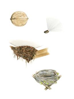 Uccelli - cibi e nidi, Birds - food and nests