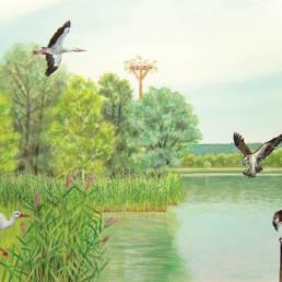 Habitat cicogna e falco pescatore, Storks and Osprey habitat