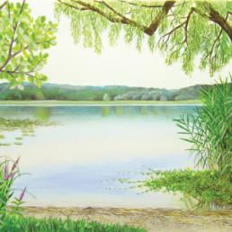 Lago, Lake habitat