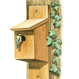 Nido artificiale per cince, Tit nest box