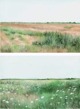 Terreni incolti, Uncultivated land